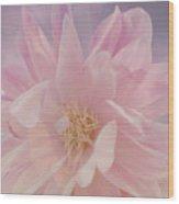 Pink Whisper Wood Print