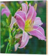 Pink White And Yellow Day Lily Wood Print