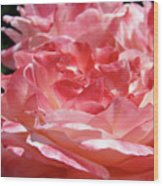 Pink White Roses Floral Art Prints Rose Baslee Troutman Wood Print