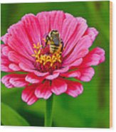 Pink Zinnia Bee Wood Print
