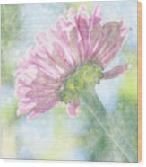 Pink Zinnia On Bokeh Background Wood Print