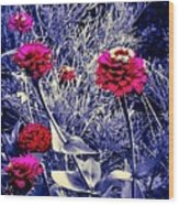 Pink Zinnia's Against A Silver Background Wood Print