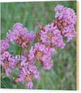 Pinkish Red Flower Bloom Close Up Wood Print