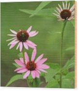 Pinks In Bloom Wood Print