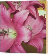 pinks Lilli Wood Print