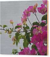 Pinks Portrait Wood Print