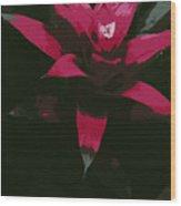 Pinky Poster Wood Print