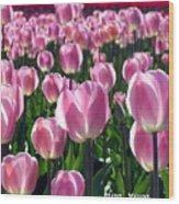 Pinky Tulips Wood Print