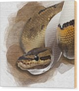 Pinstripe Pied Royal Python 01 Wood Print