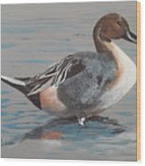 Pintail Wood Print by Jean Ann Curry Hess