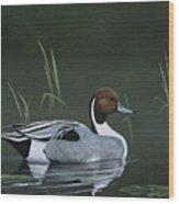Pintail Portrait Wood Print
