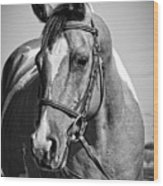 Pinto Pony Portrait Black And White Wood Print