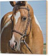 Pinto Pony Portrait Wood Print