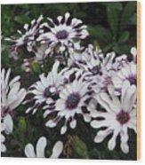 Pinwheels Wood Print