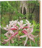 Pinxterbloom Azalea At Bowmans Hill Wood Print