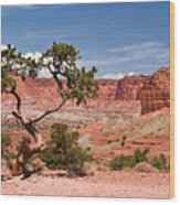 Pinyon Pine Tree Wood Print