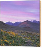 Pioneer Mountain Sunset Wood Print