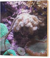 Pipe Fish And Sea Anemone  Wood Print