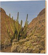 Pipe Organ Cactus At Sunrise Wood Print