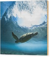 Pipe Turtle Glide Wood Print