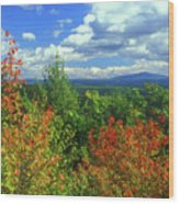 Pisgah State Park Foliage Wood Print