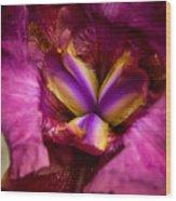 Pistil Packing Iris Wood Print