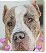 Pit Bull Dog - Pure Love Wood Print by Sharon Cummings