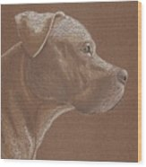 Pit Bull Wood Print by Stacey Jasmin
