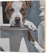 Pitbull Stare Wood Print