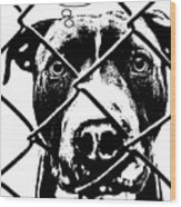 Pitbull Thinks Adopt Wood Print by Dean Russo