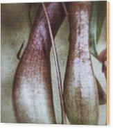 Pitcher Flower Sarracenia Wood Print