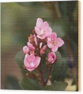 Pittosporum Pink 2 Wood Print