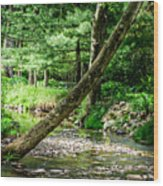 Place Of Peace Wood Print