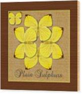 Plain Sulphur Butterfly Wheel Wood Print