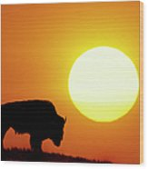 Plains Bison (bison Bison), Digital Composite Wood Print