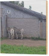 Plains Zebras In The Corner Wood Print