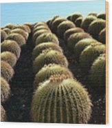 Planet Of Cactus Wood Print