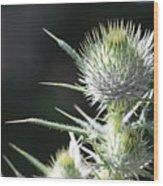 Plant 09-01-18 Wood Print