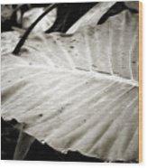 Plant 8650 Wood Print