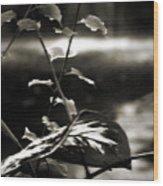 Plant 8657 Wood Print