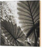 Plant 8661 Wood Print