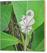 Plant Artwork Wood Print