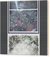 Plant Life  Wood Print