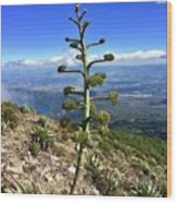 Plant On Volcano Slope Wood Print
