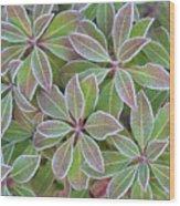 Plant Pattern Wood Print