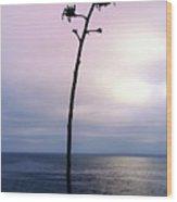 Plant Silhouette Over Ocean Wood Print