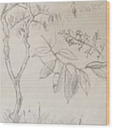 Plant Study Wood Print