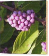Planting Fields Purple Wood Print