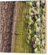 Plants And Trees Hawaii 522 Wood Print