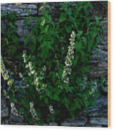 Plants Grow Anywhere Wood Print